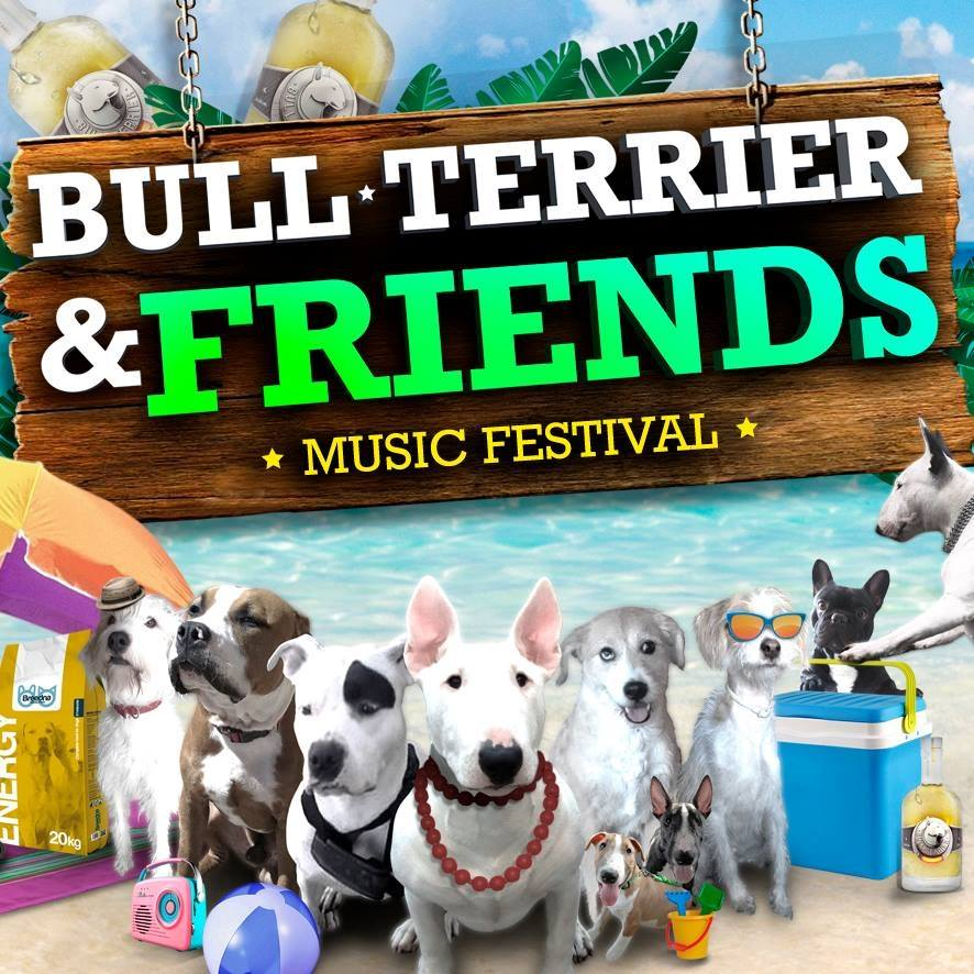 bull terrier and friends