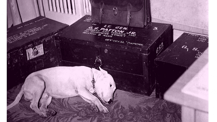 El Bull Terrier del General Patton.