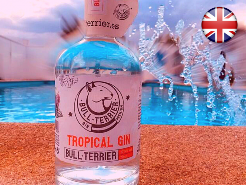 tropical-gin-bull-terrier-1